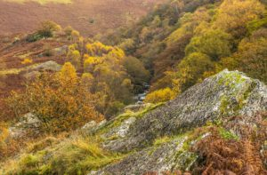 Autumn in the Upper Tywi Valley